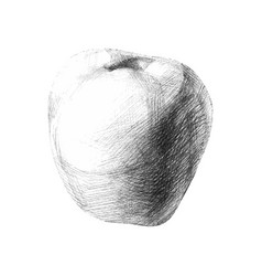 with a pencil sketch apple for your creativity vector image