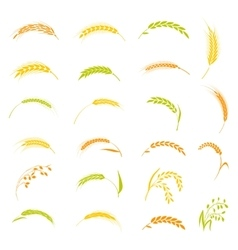 Ears of wheat bread symbols vector image vector image