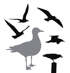 seagull collection vector image vector image