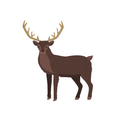 brown elk with big horns standing at white vector image