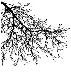 Dry tree dead tree with beautiful branch silhouet vector image vector image