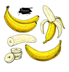 banana set drawing isolated hand drawn vector image vector image