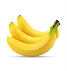 Realistic of bunch of bananas vector image vector image