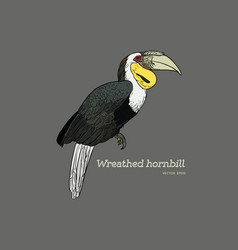 wreathed hornbill hand draw sketch vector image vector image