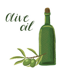 drawing olive oil vector image
