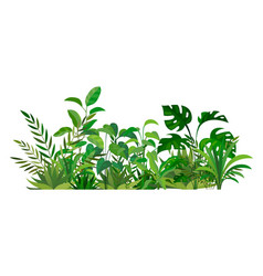 herbal green decor beauty nature ferns vector image