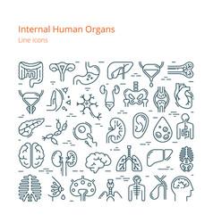 Large set linear icons human internal vector