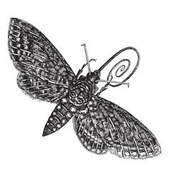 Vintage Hawk Moth Sketch vector