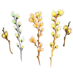 Watercolor willow branch collection vector image