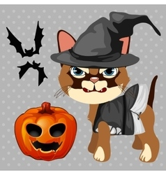 Angry cat with pumpkin and bats vector image vector image