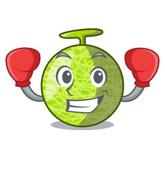 Boxing fresh melon isolated on character cartoon vector