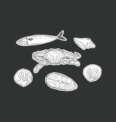 set of seafood isolated vector image