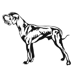 Decorative standing portrait of great dane vector