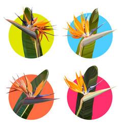 Stickers with strelitzia reginae vector