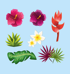 Beauty and exotic flowers roses and plants vector
