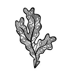 Hand drawn seaweed - fucus algae vector