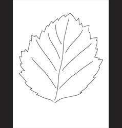 Hawthorn leaf in doodle style vector