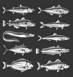 sea fish seafood tuna trout salmon anchovy vector image