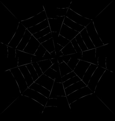 spider web detailed - white vector image