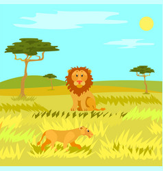 wildlife dangerous animal in savannah lion vector image