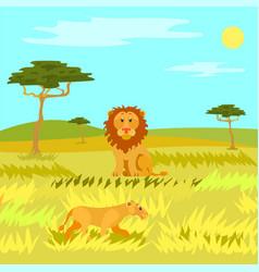 Wildlife dangerous animal in savannah lion vector