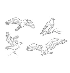 four falcons in contours vector image