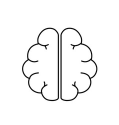 Line anatomy brain to imagination and memory vector
