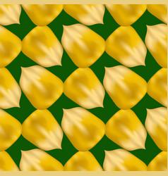 ripe yellow corn seed seamless pattern vector image