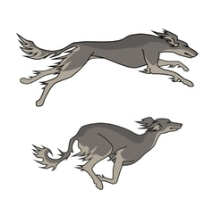 Running dogs saluki breed two poses vector
