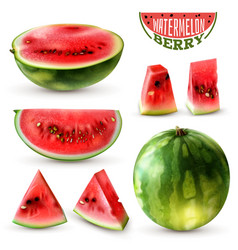 watermelon realistic set vector image