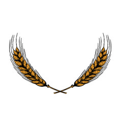wreath from wheat spikelets in engraving style vector image