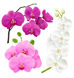 orchid flowers realistic colorful set vector image vector image