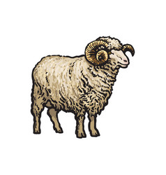 sketch cartoon style sheep isolated vector image vector image