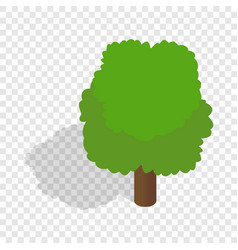 fluffy tree isometric icon vector image vector image