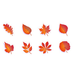 autumn leaves set colorful isolated on white vector image