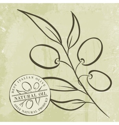 Olive Branches vector image