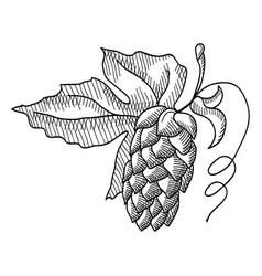 Sprig of hop decorative sketch vector