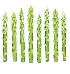 Closeup of fresh green asparagus vegetable vector