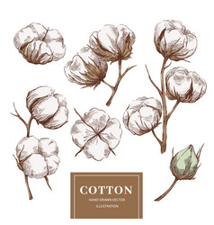 Cotton branch collection vector