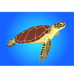 Sea turtle on blue background vector image