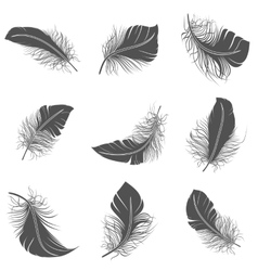 Feather Black Set vector image vector image
