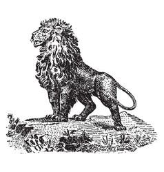 Cartoon lion vintage vector
