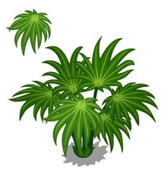 Green bush tropical plants on a white background vector