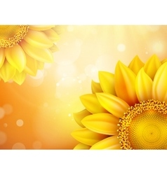 Macro SunFlower Background EPS 10 vector image