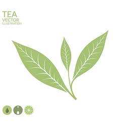 Tea leaf Isolated on white background vector