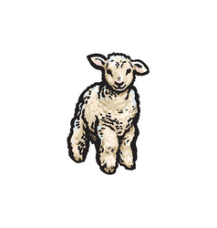 sketch cartoon style lamb isolated vector image vector image