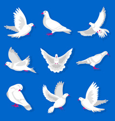 white cartoon pigeon with red beak and paws vector image