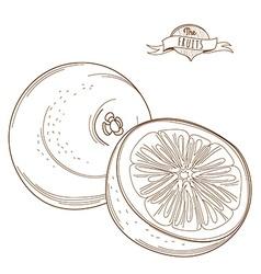 Outline hand drawn grapefruit or orange flat style vector image