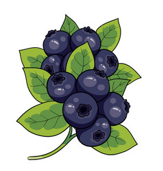 blueberry bush with green leaves isolated object vector image
