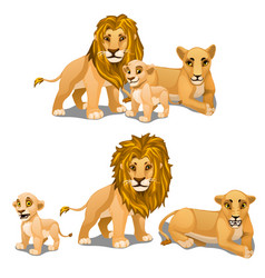 Family of lions mother father and baby vector
